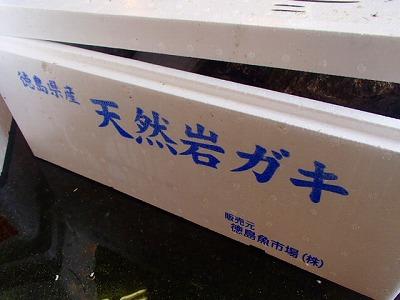 s-P6202923
